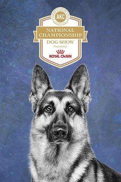 Сериал AKC National Championship Dog Show