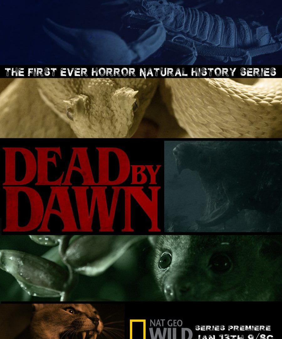 Show Dead by Dawn