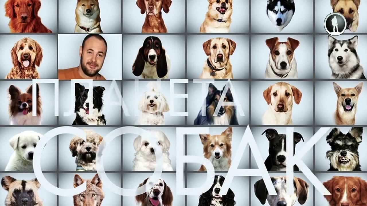 Show Планета собак