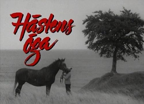 Show Hästens öga