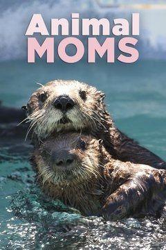 Show Animal Mums