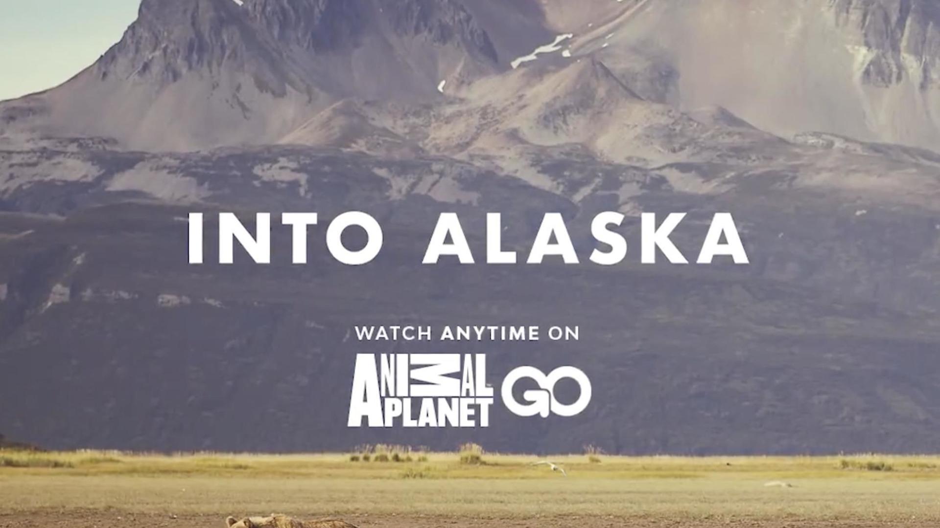Show Into Alaska