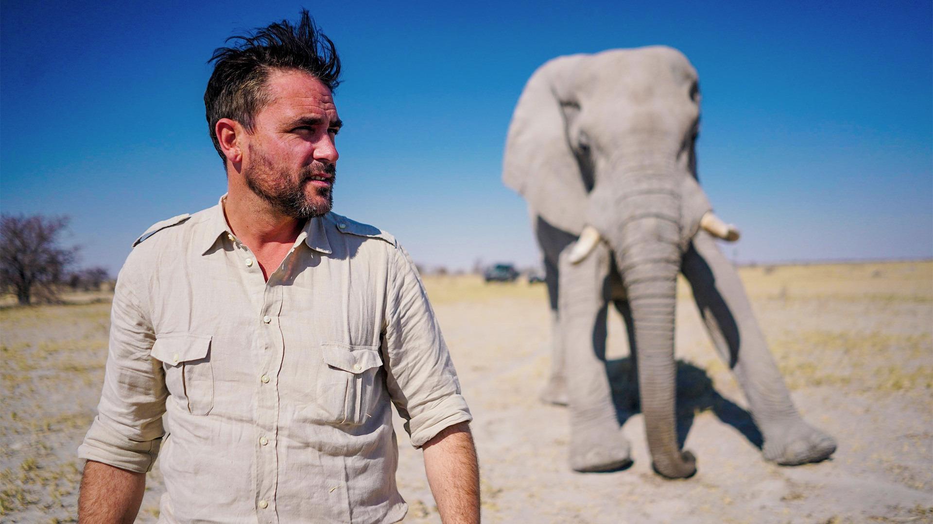 Show Walking with Elephants