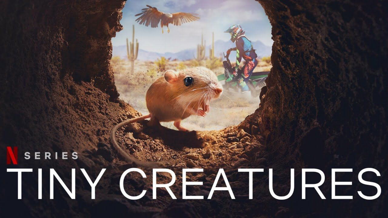 Show Tiny Creatures
