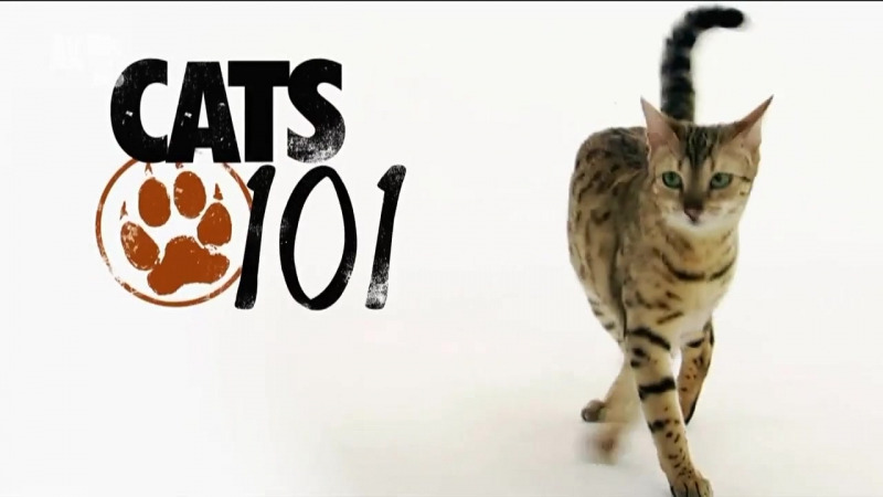 Show Cats 101