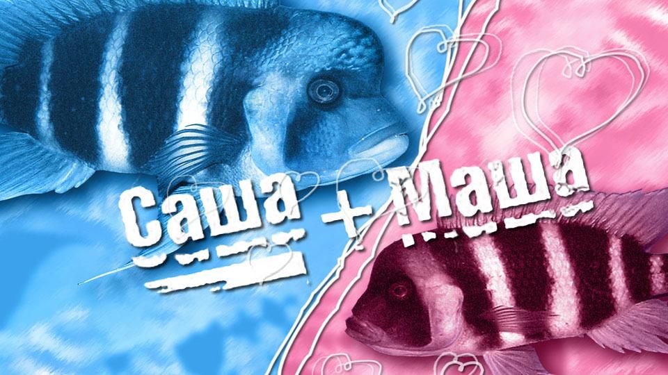Show Саша+Маша