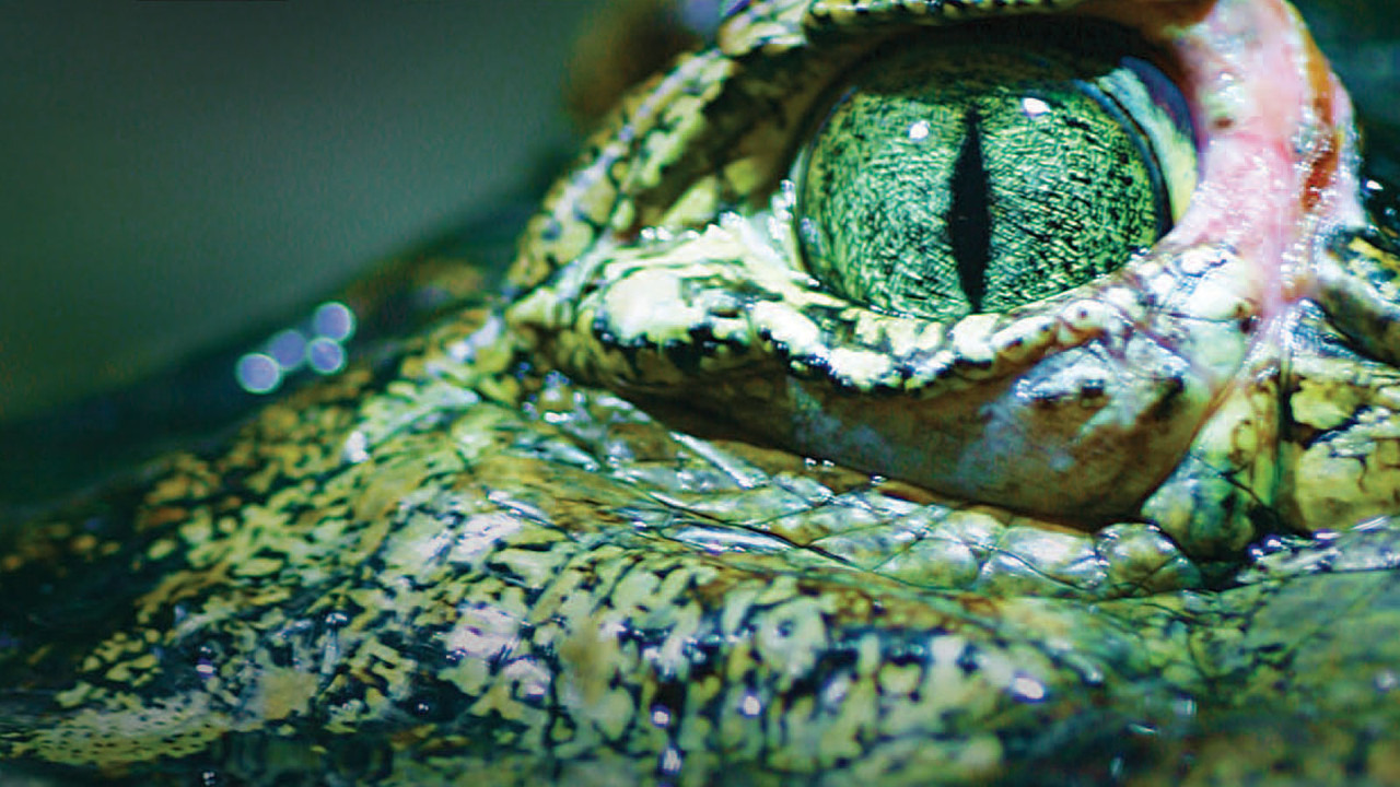Show 72 Dangerous Animals: Australia