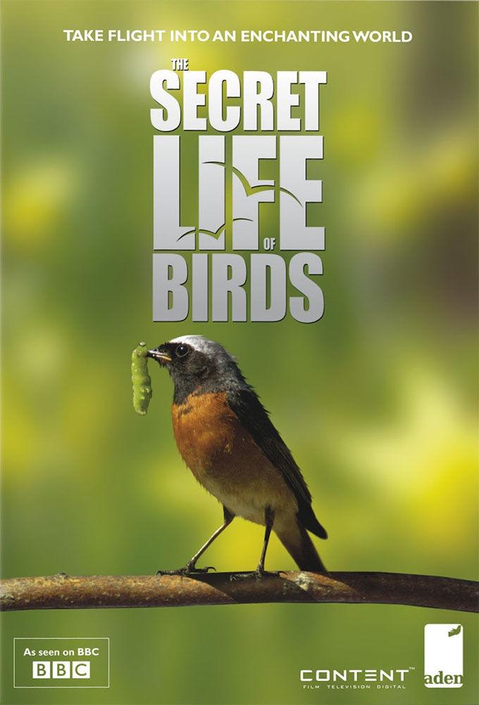 Show Iolo's Secret Life of Birds