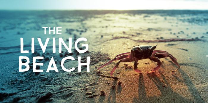 Сериал Живой пляж