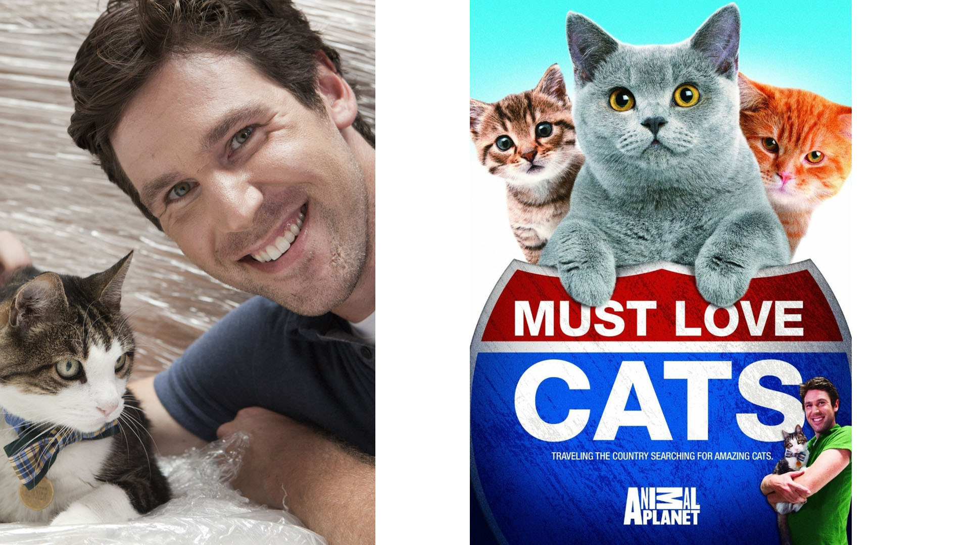 Show Must Love Cats