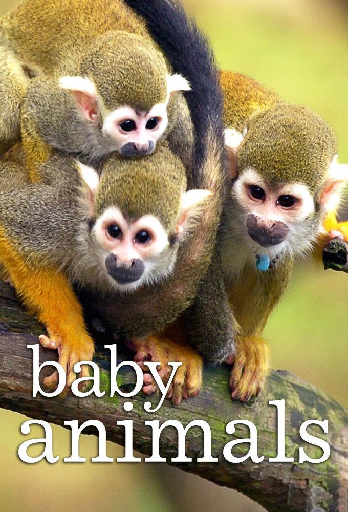 Show Baby Animals