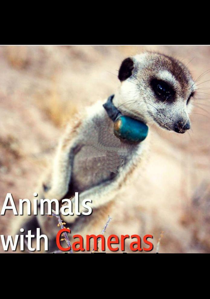 Show Animals with Cameras
