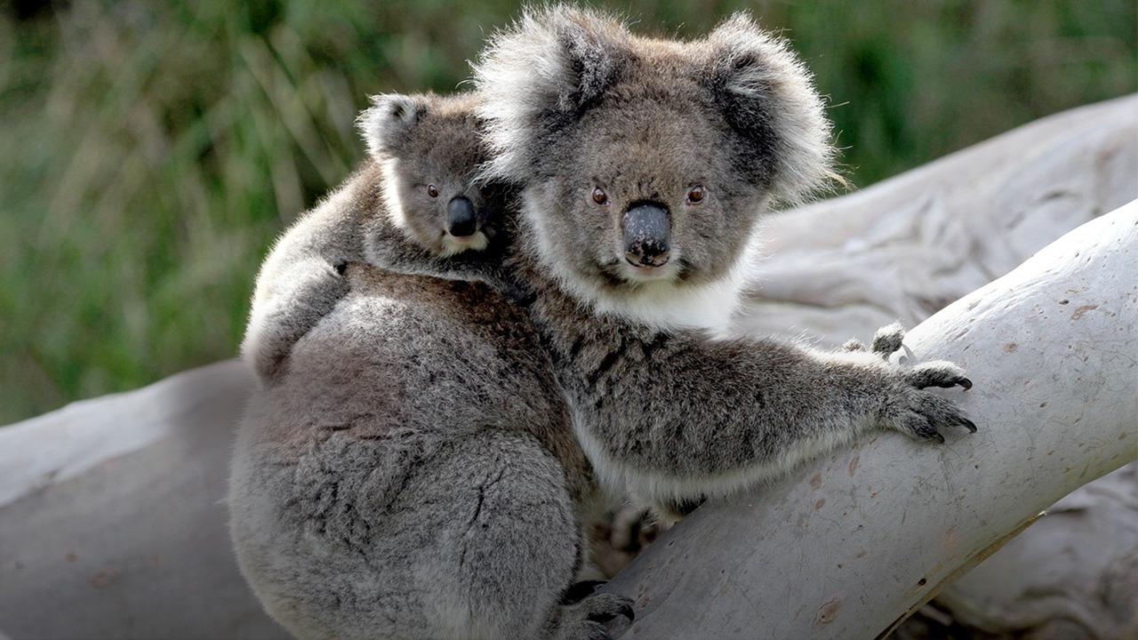 Show Wild Australia