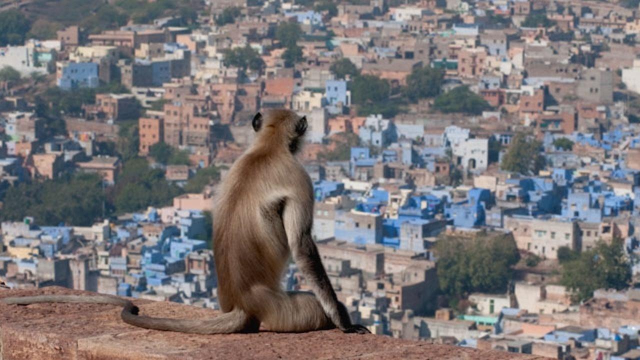 Сериал В дебрях Индии