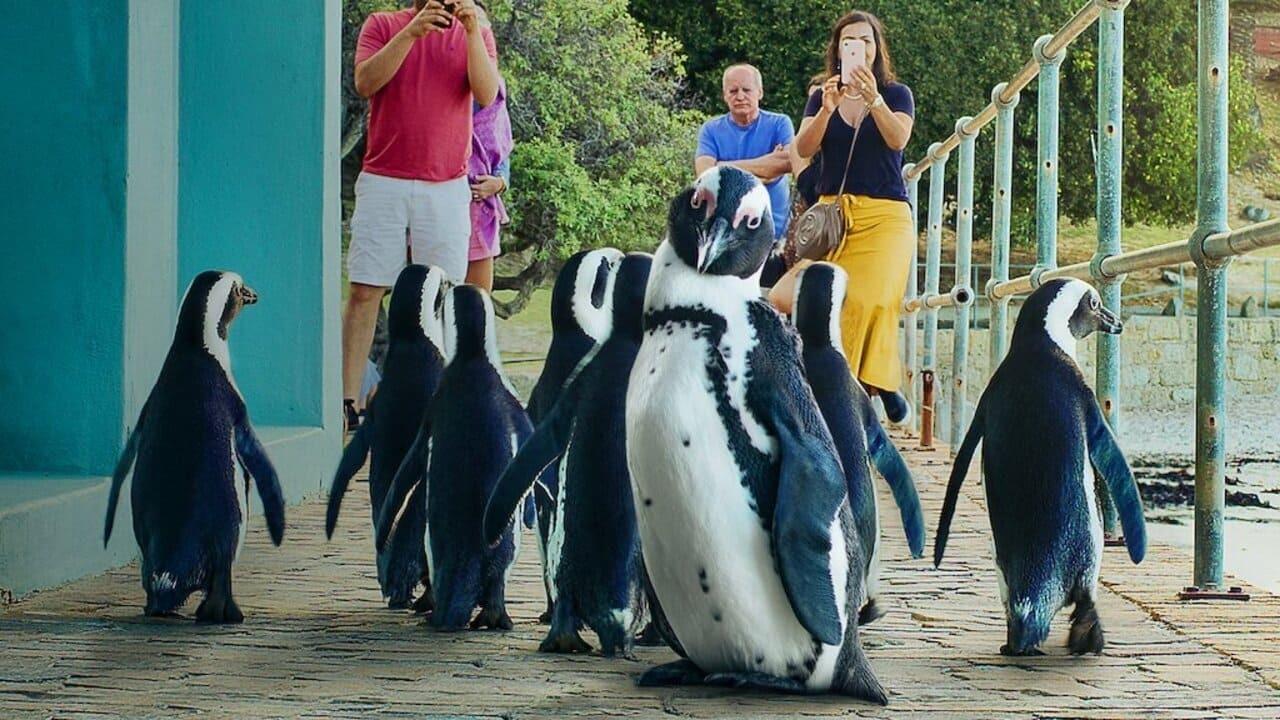 Show Penguin Town