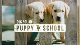 Собачий отряд: щенячья школа сезон 2