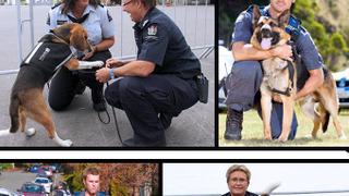 Dog Squad сезон 9