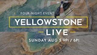 Yellowstone Live сезон 2