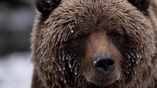 Wild Canada season 1