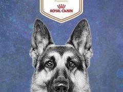 AKC National Championship Dog Show сезон 2017