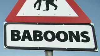 Baboons with Bill Bailey season 1