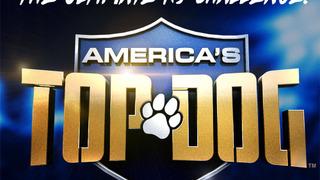 Лучший пес Америки сезон 2
