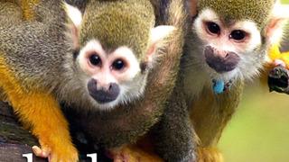 Baby Animals сезон 1